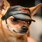 Las 9 mejores gorras para perros