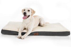 Las 9 mejores camas ortopédicas para perros