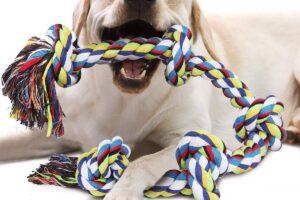 Los 10 mejores mordedores para perros