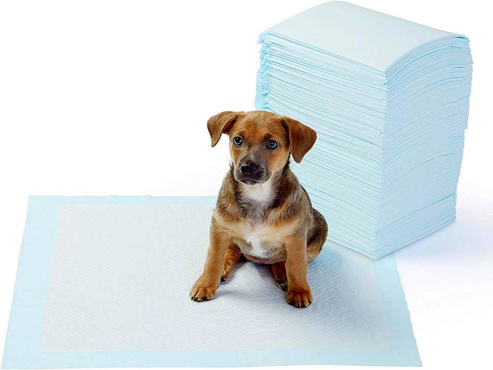 Empapador para perros AmazonBasics TRP100R