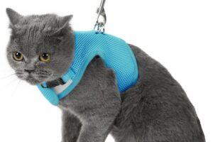 Los 9 mejores arneses para gatos