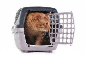 Los 9 mejores transportines para gatos