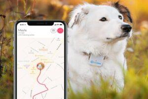 Los 10 mejores GPS para perros