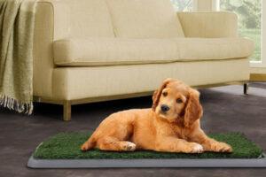 Los 10 mejores empapadores para perros