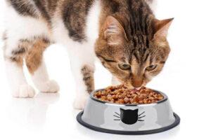 Los 10 mejores comederos para gatos