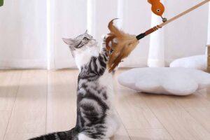 Los 9 mejores juguetes interactivos para gatos