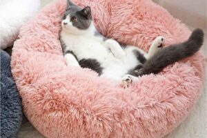 Las 10 mejores camas para gatos