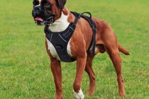 Los 10 mejores arneses para perros