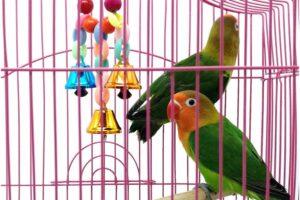 Las 10 mejores jaulas para pájaros