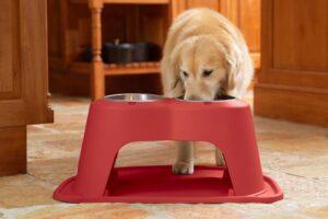 Los 10 mejores comederos para perros