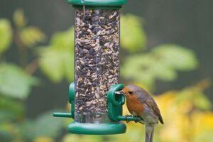 Los 10 mejores comederos para pájaros